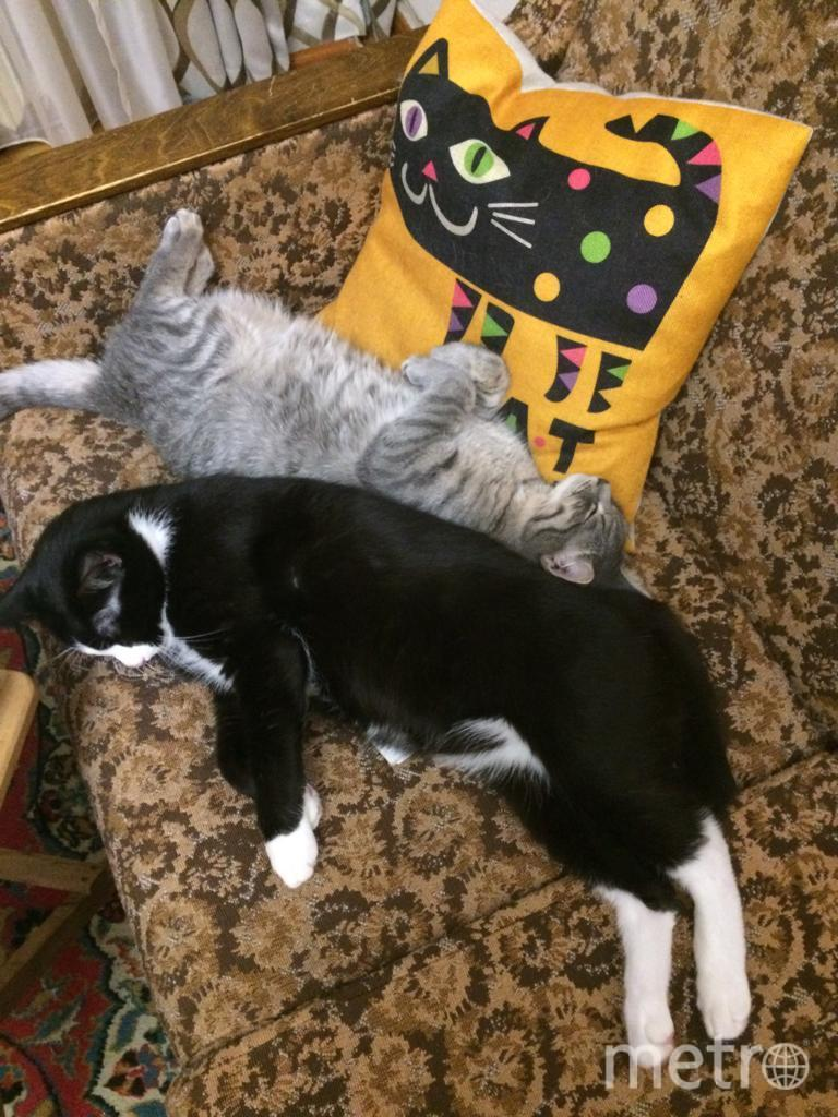 Фредди(серый) и Мартин(чёрный). Мартину уже 11 лет, а котёнка Фредди мама подобрала на улице в ноябре 2018г, когда возвращалась домой после просмотра Богемской рапсодии (потому и Фредди). Несмотря на своенравный характер, Мартин принял «подобрашку» и даже проявляет отцовскую заботу. Фото Светлана