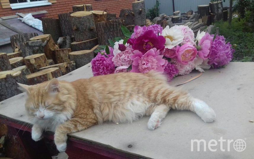 Наш кот Жастин открывает дачный сезон! Фото Алексей