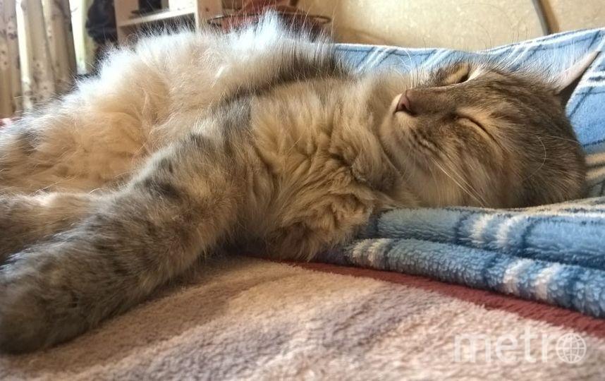 Это наша Спящая красавица Алиса. Любит бегать и играть. Когда спит прямо Ангелочек. Фото Ольга