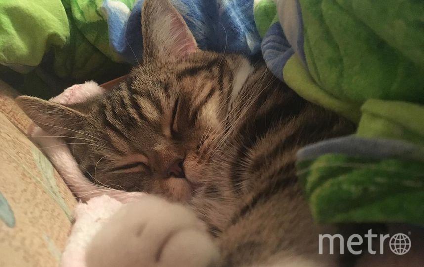 Арчи много бегает,но и много спит. Фото Анастасия