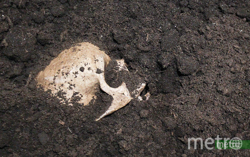 В Пермском крае прошёл ежегодный субботник по уборке человеческих останков. Архивное фото. Фото Василий Кузьмичёнок