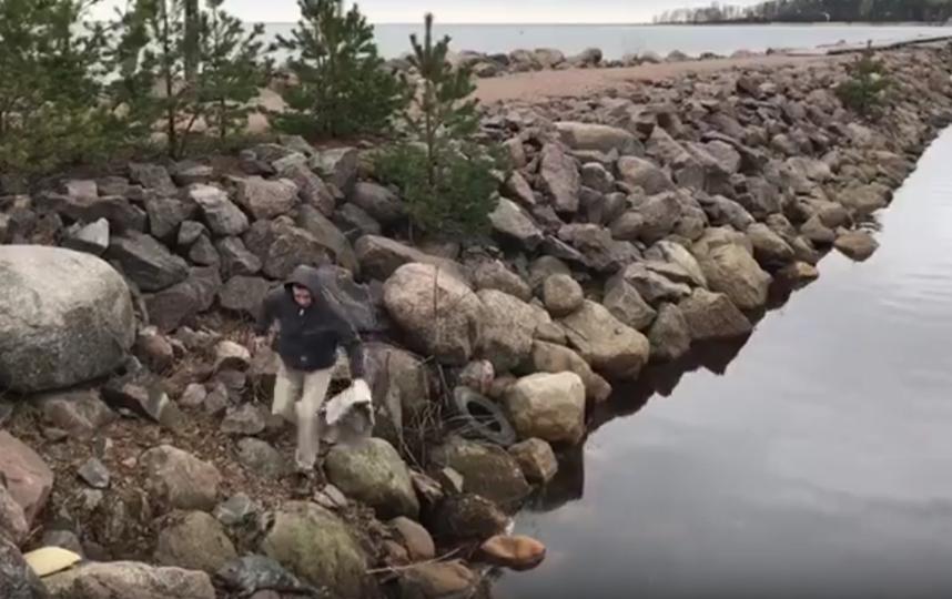 Зоологи спасли нерпу на берегу Финского залива: Видео. Фото sealrescue, vk.com
