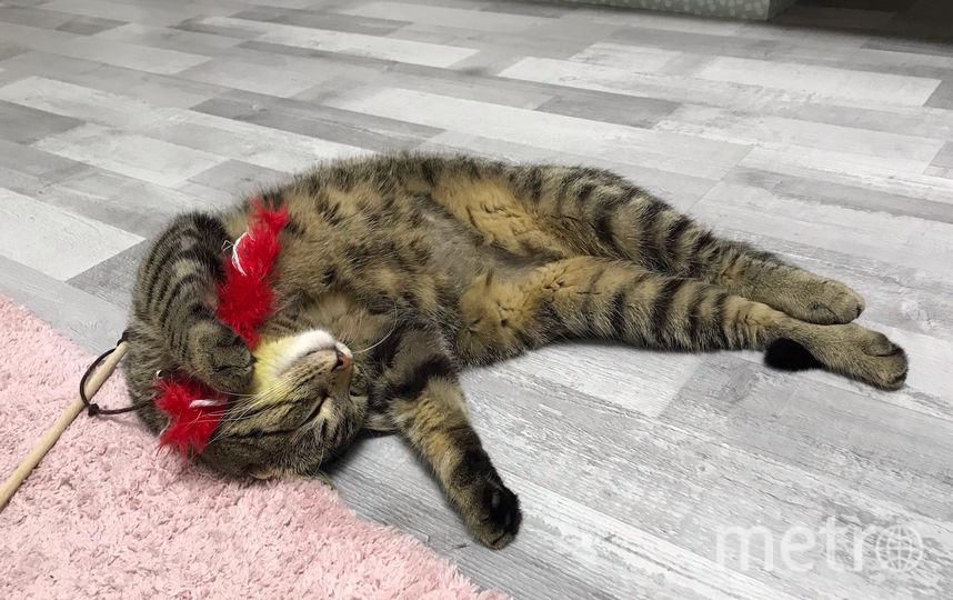 У Мартина после тяжёлого рабочего дня, нет сил даже на развлечения. Фото Анастасия