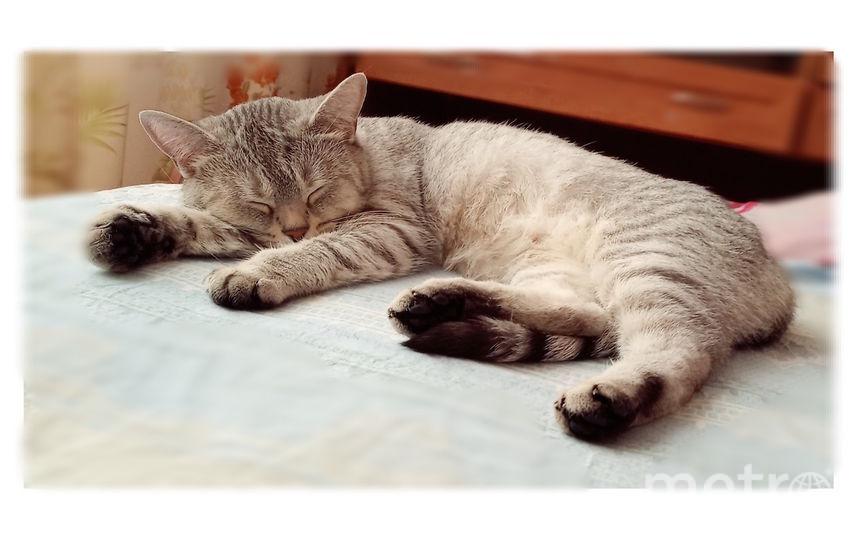 Кошка Афина. Фото Марина