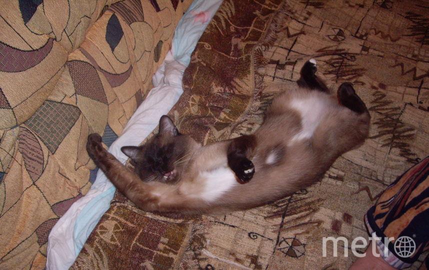 Ничего необычного, просто Оскар вздремнул. Фото Игорь