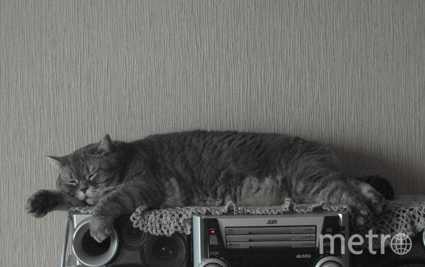 Это наша Мусенька! Ей 10 лет. Вес 6 кг. Фото Виталий