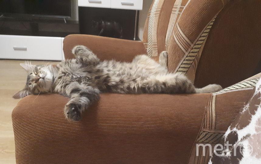 Кличка кота: Маки. Фото Алёна