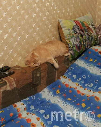 """Моему котику 3 года. Зовут Патрис. Очень любит спать в стиральной машине. Любит пакеты, коробки, сумки.. Фото Ольга Павловна, """"Metro"""""""