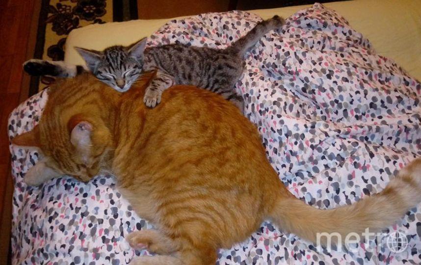 """Добрых снов всем желают мои красавцы - старший Ливси и маленький Тоник. Фото Шаралапова Татьяна, """"Metro"""""""