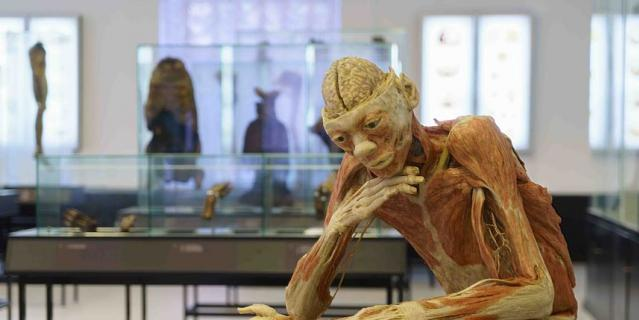 Один из самых впечатляющих экспонатов музея.