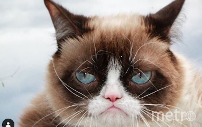 Сердитая кошка Grumpy Cat. Фото www.instagram.com/realgrumpycat