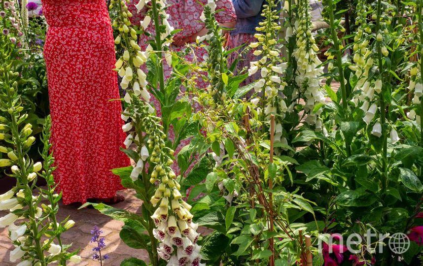 Выставка Chelsea Flower Show. Фото Getty