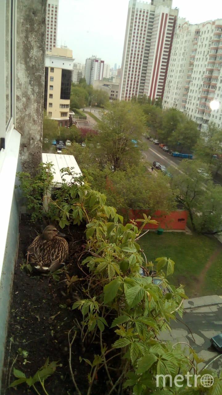 Тот самый балкон. Фото предоставила Марианна Фомичёва