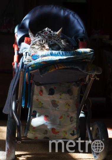 """Кошка Фаня, которою укачали. Фото Игорь Кленовый, """"Metro"""""""