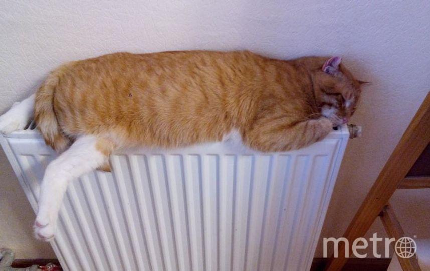 """Это наш Сеня. Очень любит тепло, поэтому где греет – там и он! Фото Петрова Валентина, """"Metro"""""""
