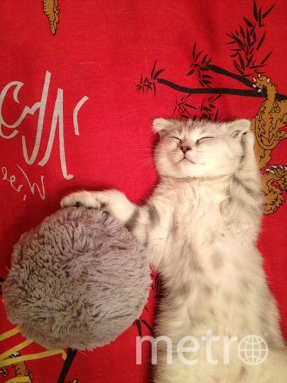 """наша любимица Пиза:)) Способна уснуть в самых непринуждённых позах). Фото Светлана., """"Metro"""""""