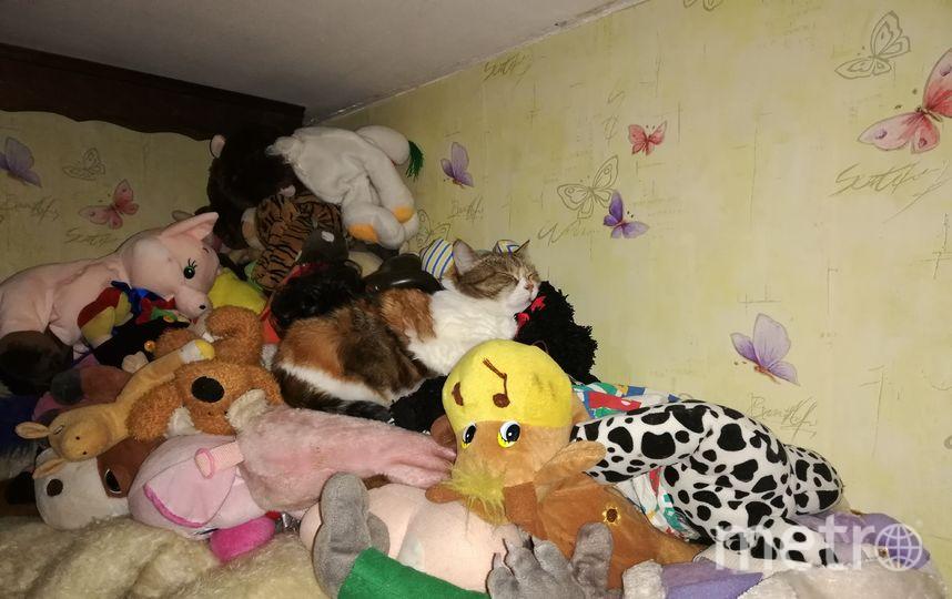 """Кошка """"Рыся""""! Появилась у нас в декабре 2009 года, подбросили еле живого котенка. Долго выхаживали и вот, уже 10 лет, мы вместе. Фото Елена, """"Metro"""""""