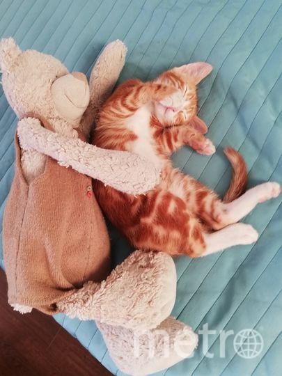 """Предлагаю для конкурса """"Спит"""": наш котейка - Кандинский(3 мес) - забияка-улыбака! Его невозможно не любить! Фото Анна, """"Metro"""""""