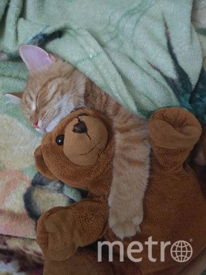 """Котик Тишка, 5 месяцев. Фото света николаева, """"Metro"""""""