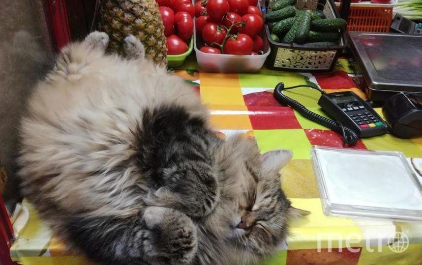 """Эту изумительную кошечку зовут Ксюша. Она живёт в овощном ларьке рядом с нашим домом уже не первый год. Ксюша очень общительная и любопытная. Когда собираются покупатели, она занимает центральное место рядом с весами и интересуется покупками. Фото Марина, """"Metro"""""""