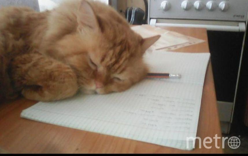 """Это мой кот Рыжик. Фото Наталья Григорьева, """"Metro"""""""
