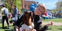 Более 100 собак в маскарадных костюмах выйдут на
