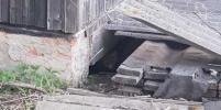 Дикие лисята поселились в деревне под Москвой