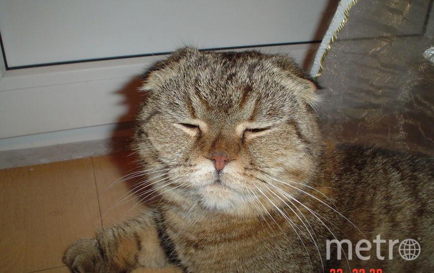 «На заре ты меня не буди…» ЮКСИ – что значит «солнечный котенок». Здесь ему годика 3. Фото Ольга Чуева