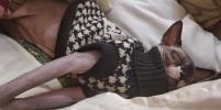 Сколько можно спать?! Москвичи делятся фото спящих котиков