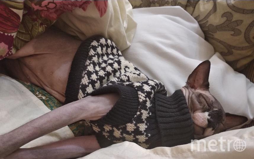 Наша кошечка Клеопатра,мерзлячка. Спим только в тепле. Фото Юлия