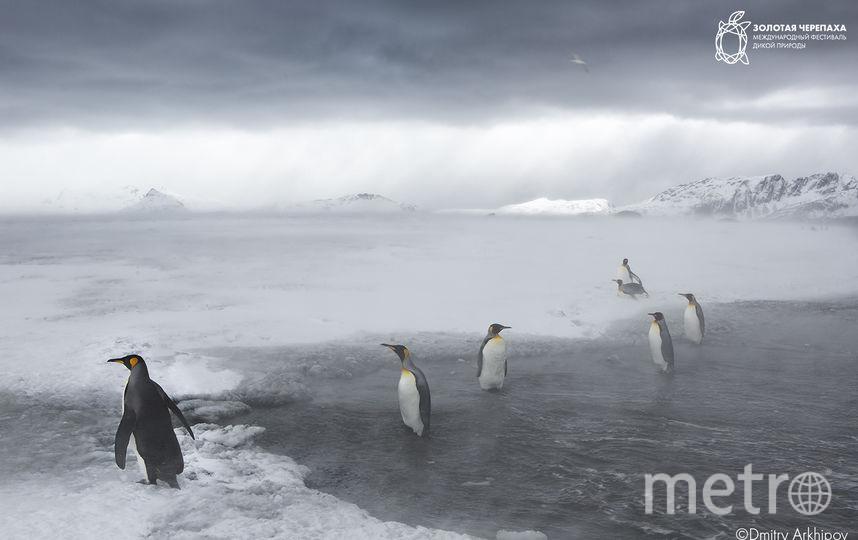 Антарктида. Фото Дмитрий Архипов
