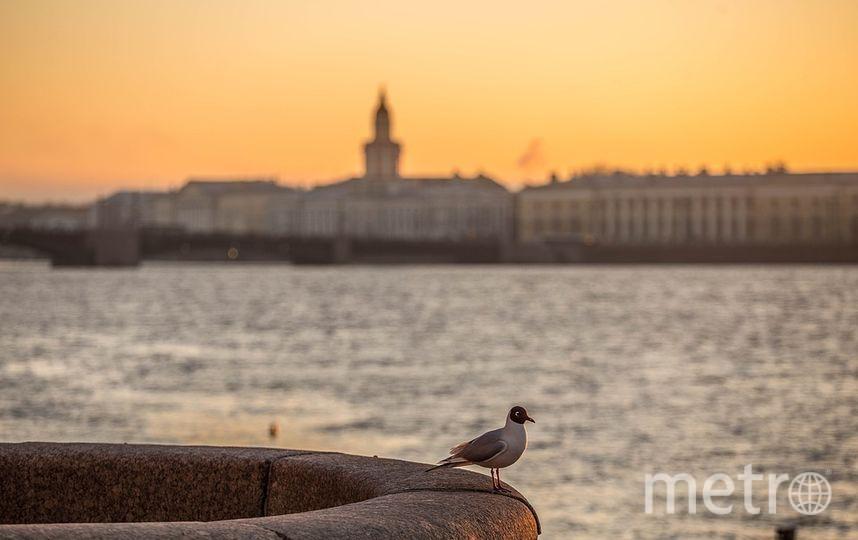 В Петербурге объявлен жёлтый уровень опасности. Фото pixabay.com