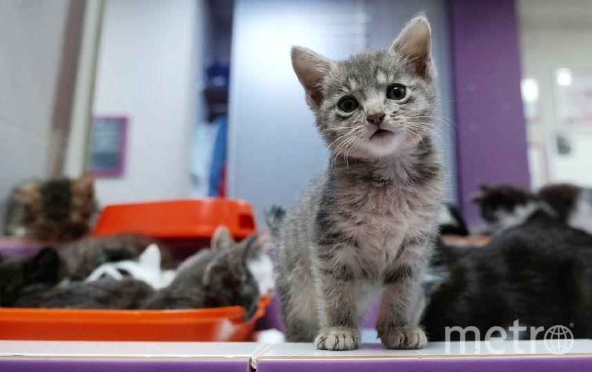 """Эрмитажные котята ищут дом. Фото Алена Бобрович, """"Metro"""""""