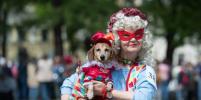 Таксы поразили яркими костюмами на параде в Петербурге: фото