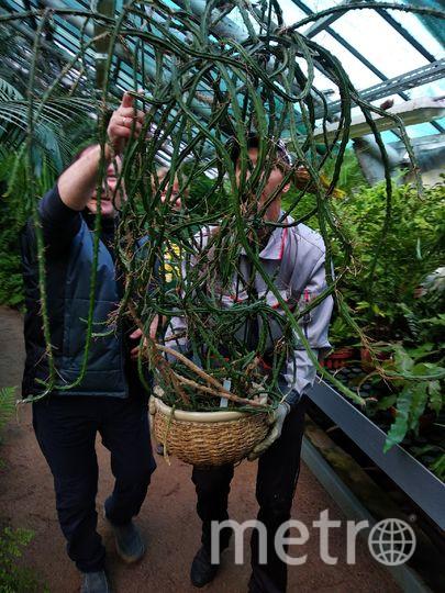 Ботанический сад. Фото vk.com/botsad_spb, vk.com