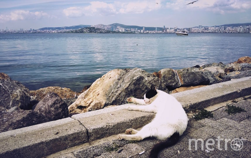 Кот не мой, а турецкий, но милый, снимок сделан на Принцевых островах. Фото Екатерина, Getty