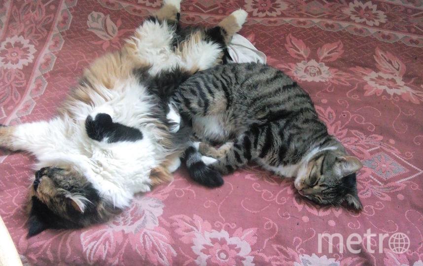 Мурчик серенький (он же Мурзик, он же Козик) и Шуня трехцветная (она же Шуршуня, она же Копошуня). Фото Жанна, Getty