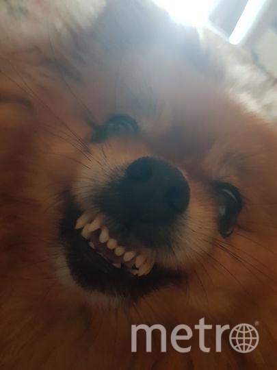 Кличка собаки - Виолетта. Наша собака кажется очень милой, но временами она проявляет свой настоящий характер. Фото Мария