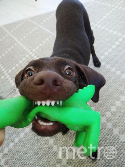 Наша зубастая собака Баскервилей) Активная, вечно несущаяся вперёд, гроза соседских собак, кошек и велосипедов. Фото Анастасия