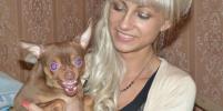 27 собак Баскервилей, которые живут в Москве