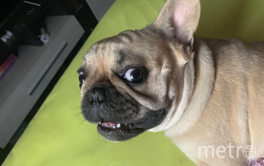 Буч 1 год. До УЖАСА обонятельный пёс. Фото Людмила