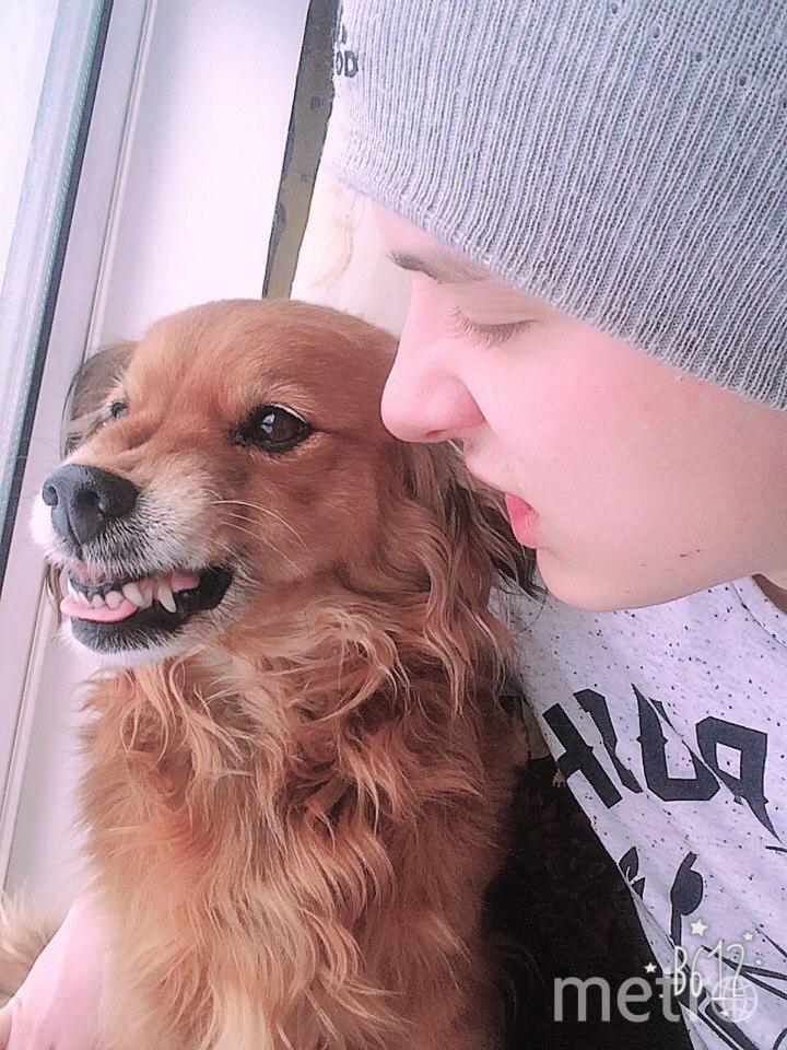 На фото мой брат с собакой. Обычно она милая и пушистая, но даже такую терпеливую собаку, как Шпулька можно вывести из себя.... Фото Ирина