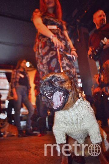 Леди Юмки – это вам не диванная собака, а организатор встреч, первая московская тусовщица и просто светская львица. Всегда за любой кипишь, кроме голодовки! Фото Алёна
