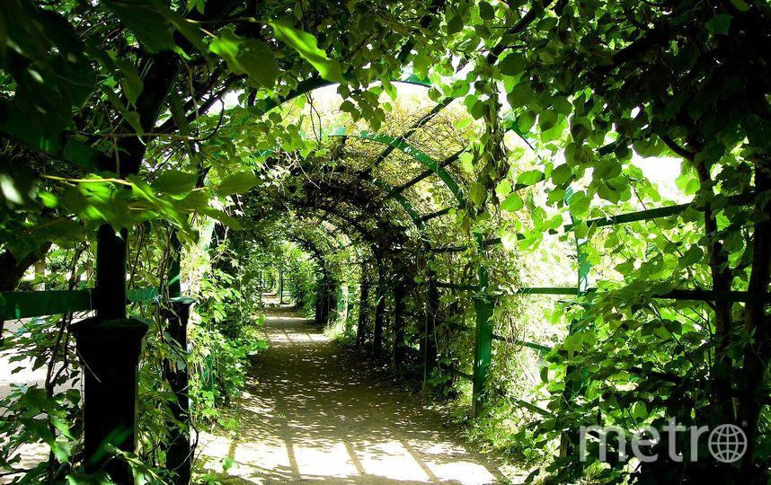 70 городских парков, скверов и других зелёных территорий находятся под угрозой застройки. Фото Pixabay.com