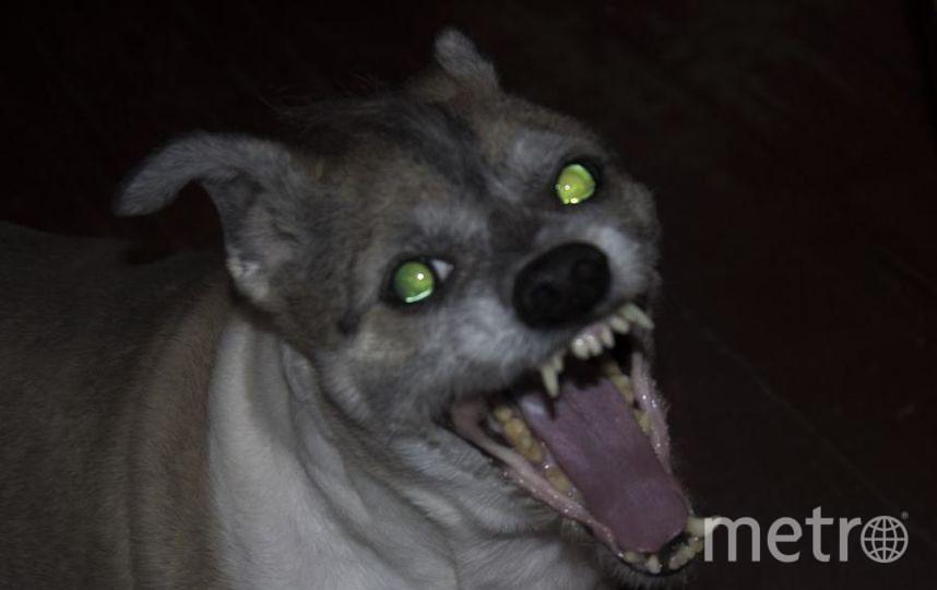 """На улице Альму часто принимают за щенка, на самом деле ей 16 лет. Фото Полина, """"Metro"""""""