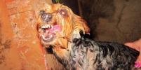 Впечатляющие фото собак Баскервилей показали петербуржцы