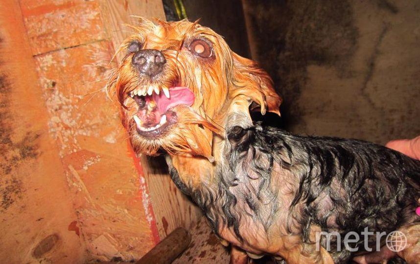 """Это наша девочка Чита, очень любит мыться в бане. Но перед этим нужно ее поймать, бросить в таз и бежать! Фото Алексей Охременко, """"Metro"""""""