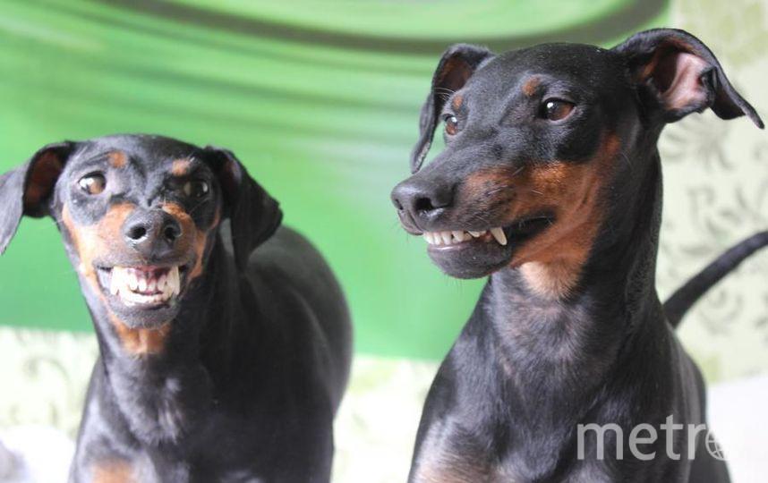 """Мама Фанни и сын утёр -улыбаются !!!мои любимые Манчестеры. Фото """"Metro"""""""