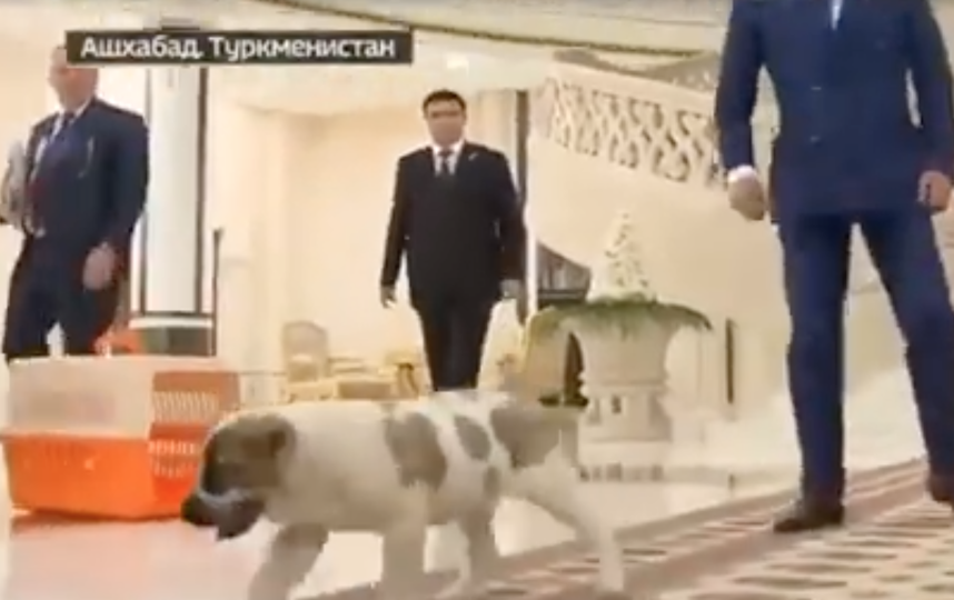 Дмитрию Медведеву подарили щенка алабая. Фото Скриншот/Россия 24, Скриншот Youtube