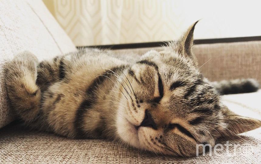 Нашего котёнка зовут Мята. Она очень активная, поэтому хорошие фотографии можно сделать только в спящем виде. Они получаются безумно милые! Фото Лиля